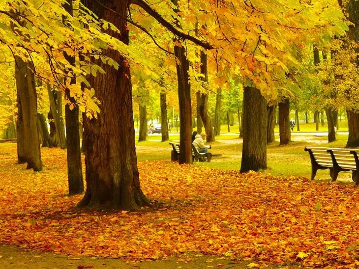 лучшая осень