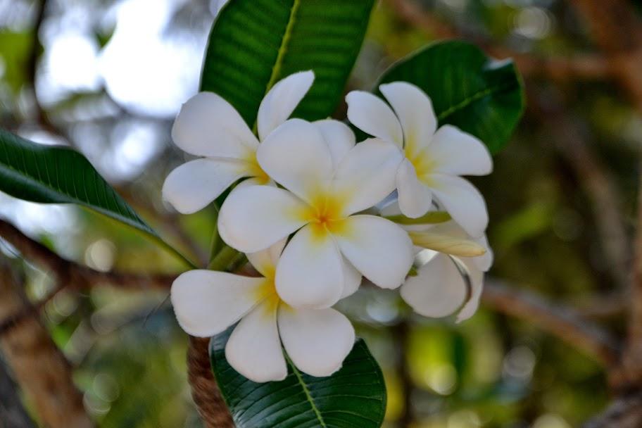 flowers bali