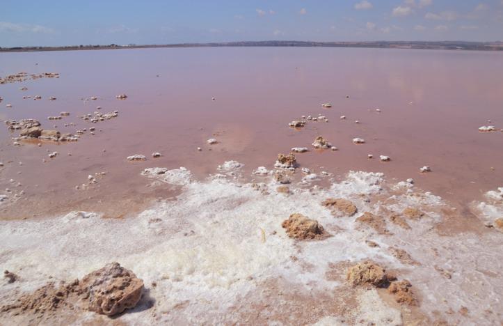 pink lake torrevieja