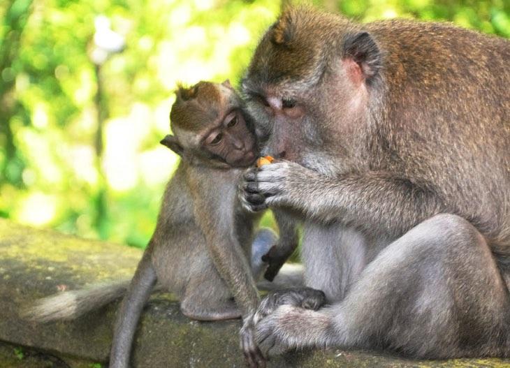monkey park bali