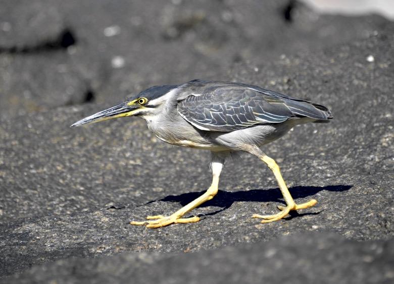маэ птицы