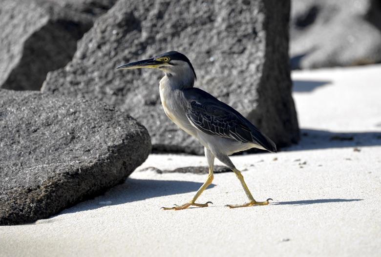 птицы сейшельских островов