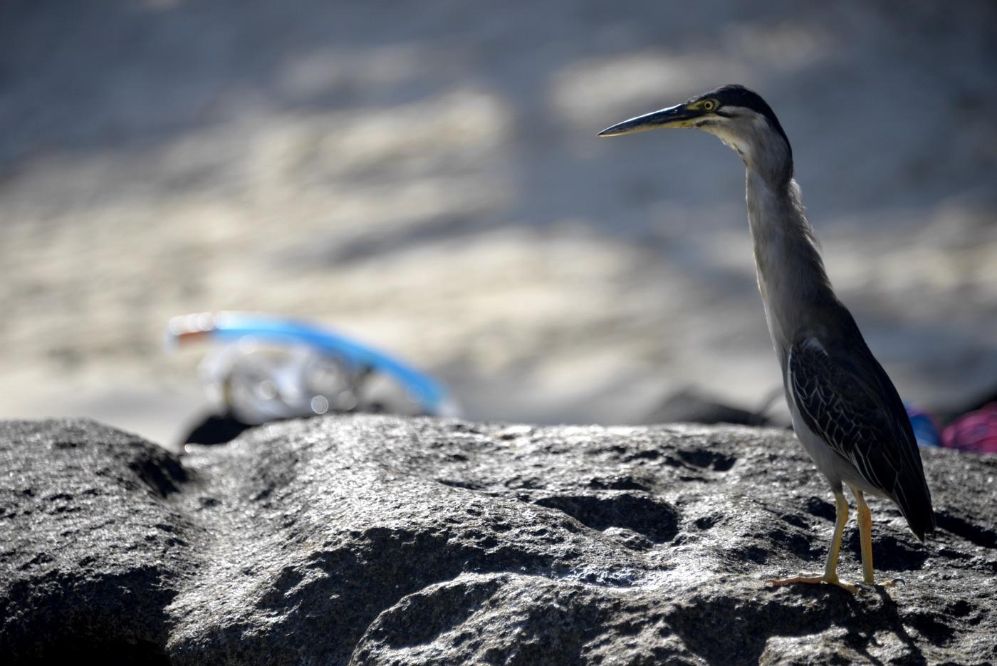 птица с длинной шеей сейшелы