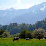 молоко швейцария