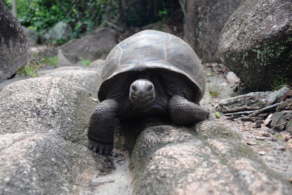 остров черепах сейшелы