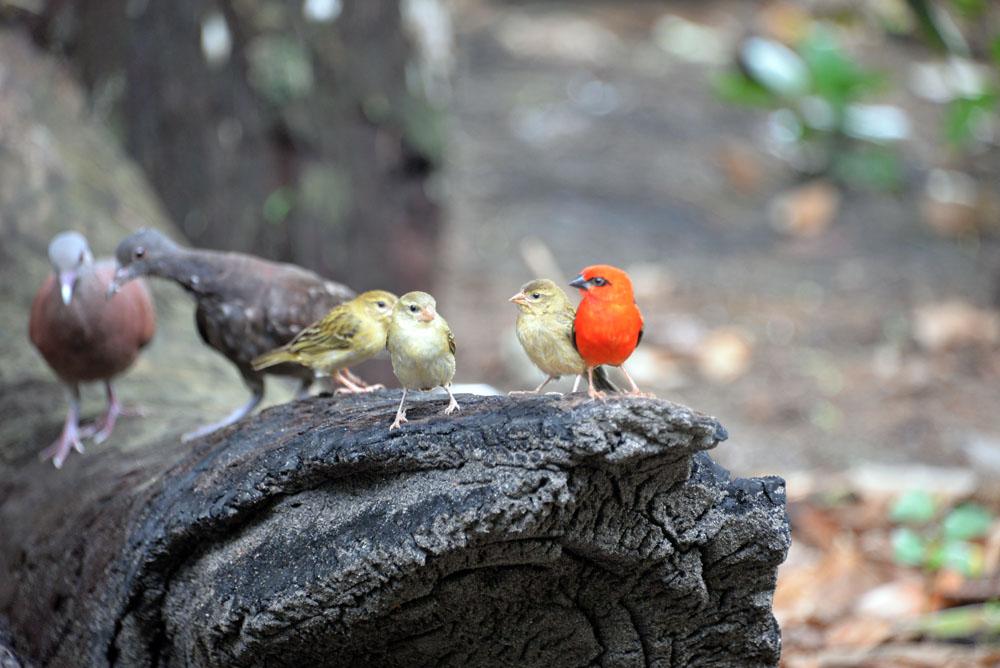 fudy bird