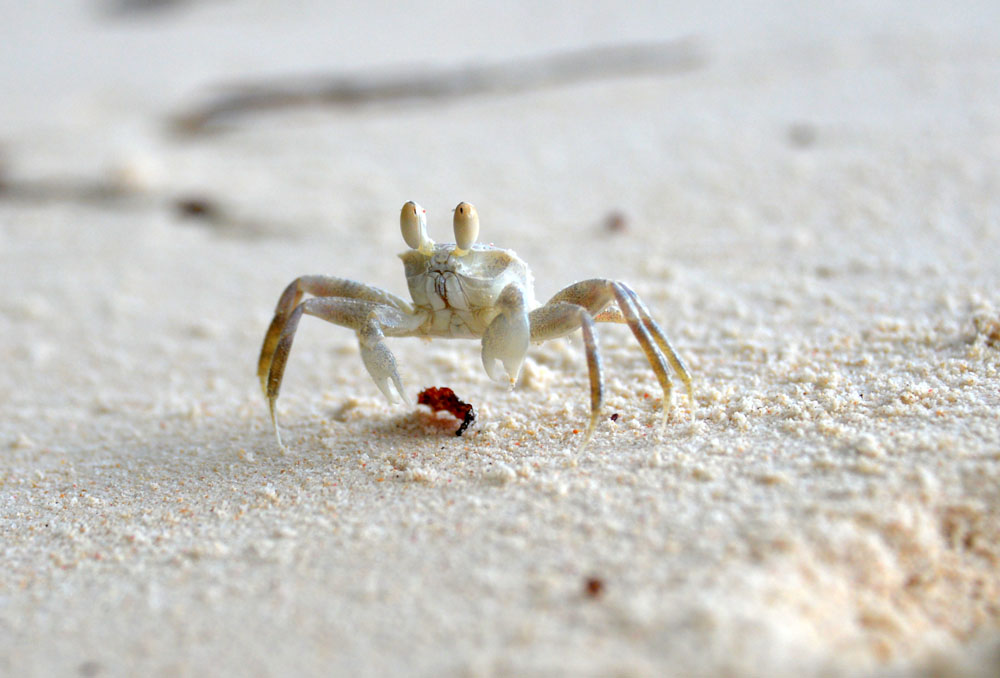 crabs beach
