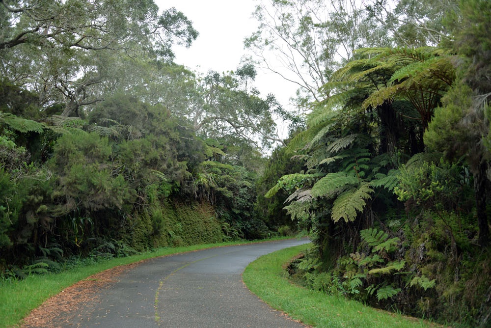 дорога в лес белув реюньон