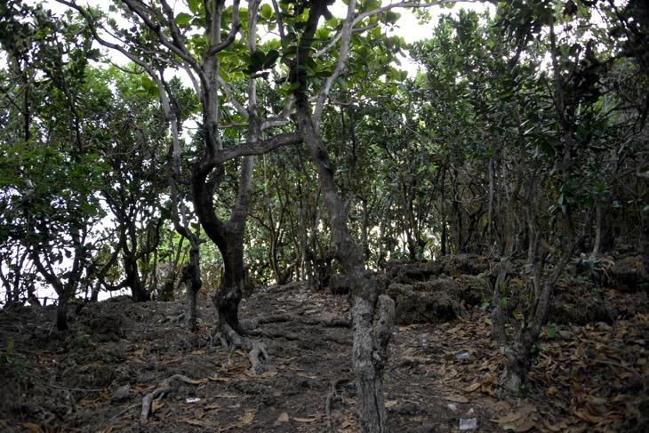 коралловый остров маврикий