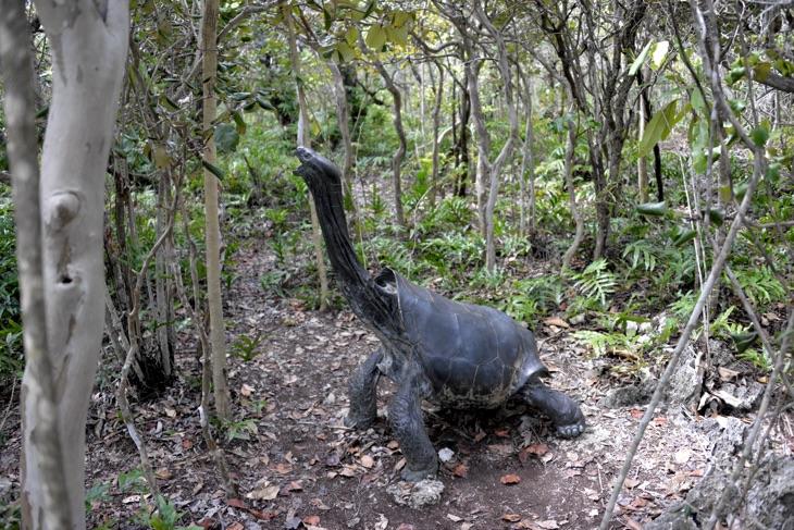 extinct tortoise mauritius