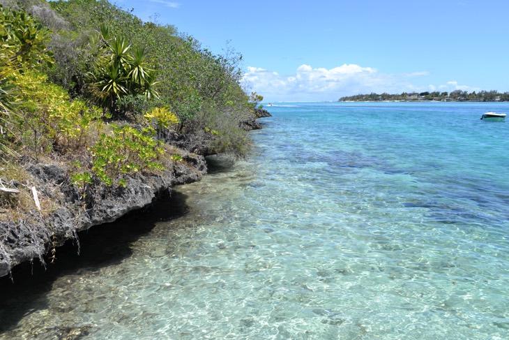 остров цапель маврикий