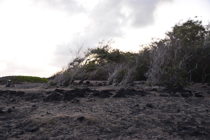 le souffleur mauritius