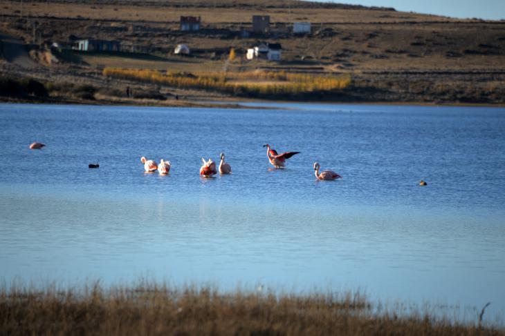 фламинго озеро аргентина