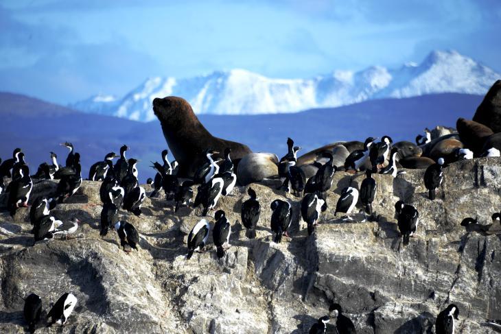 lobos marinos ushuaia