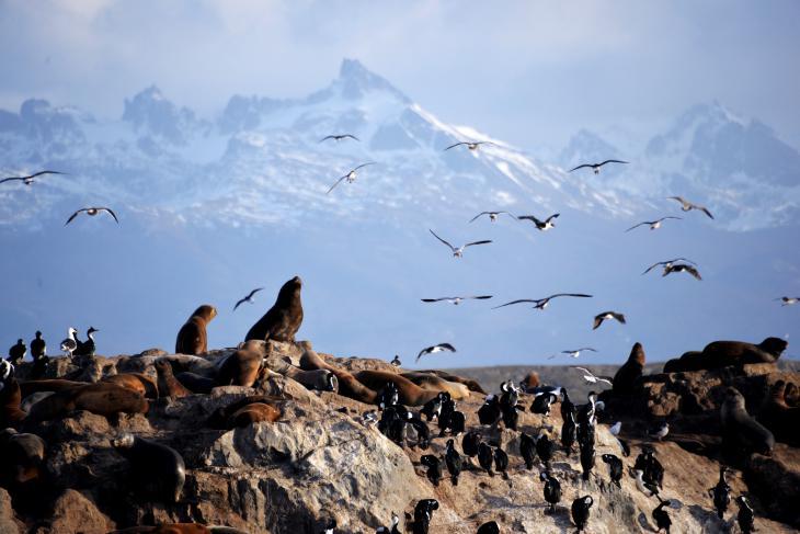 fauna ushuaia mar