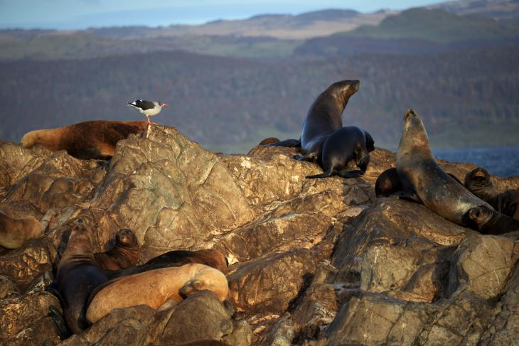 cormoran ushuaia