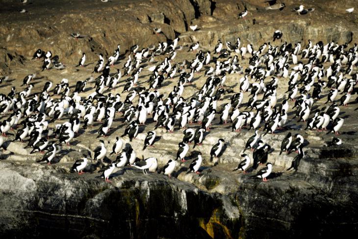 ушуая фауна море