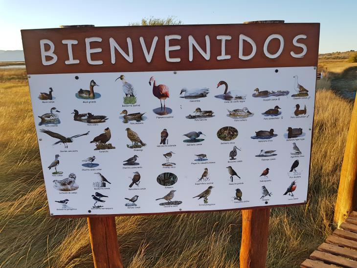 birds variaty patagonia