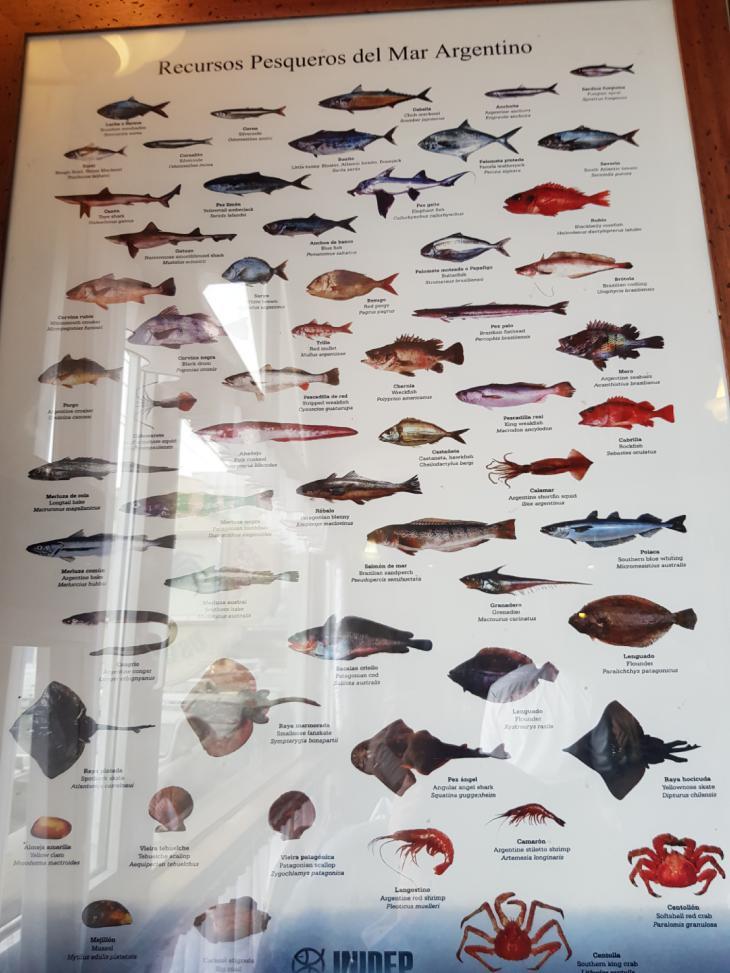 fish ushuaia
