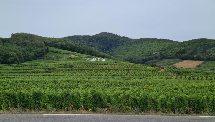 эльзас виноград